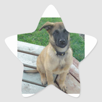 Belgian Shepherd Malinois Dog Star Sticker