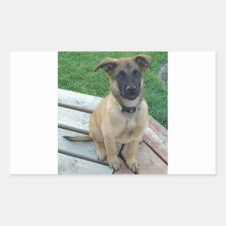 Belgian Shepherd Malinois Dog Sticker