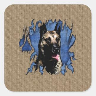 Belgian shepherd - Malinois Square Sticker