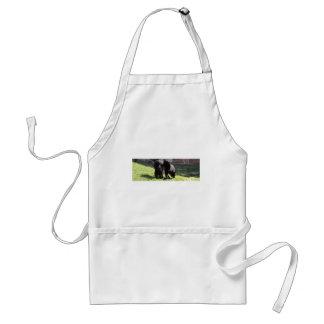 Belgian Shepherd Standard Apron