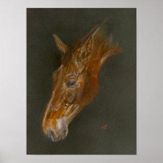 Belgian Warmblood horse Poster