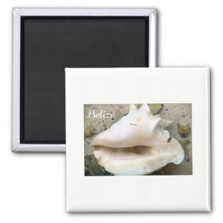 Belize Conch Shell Magnet