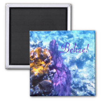 Belize Sea Fan Magnet