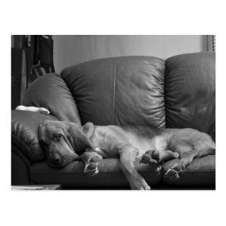 Bella Bloodhound Post Card