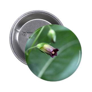 Belladonna or deadly nightshade (Atropa belladonna 2 Inch Round Button