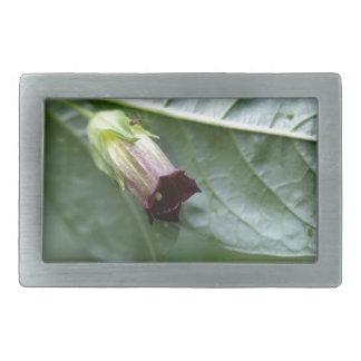 Belladonna or deadly nightshade (Atropa belladonna Belt Buckle