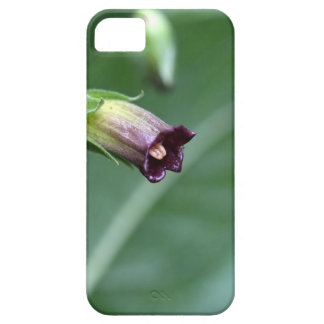 Belladonna or deadly nightshade (Atropa belladonna Case For The iPhone 5