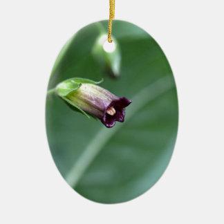 Belladonna or deadly nightshade (Atropa belladonna Ceramic Oval Ornament