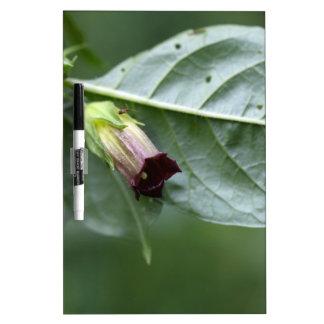 Belladonna or deadly nightshade (Atropa belladonna Dry-Erase Board