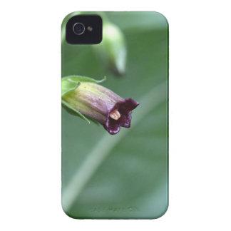 Belladonna or deadly nightshade (Atropa belladonna iPhone 4 Case-Mate Case