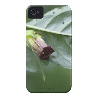 Belladonna or deadly nightshade (Atropa belladonna iPhone 4 Covers