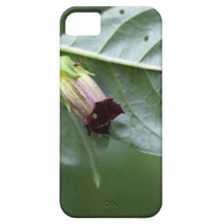 Belladonna or deadly nightshade (Atropa belladonna iPhone 5 Cover