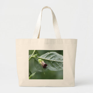 Belladonna or deadly nightshade (Atropa belladonna Large Tote Bag