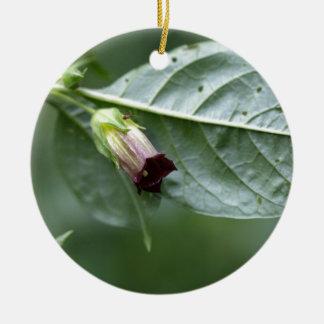 Belladonna or deadly nightshade (Atropa belladonna Round Ceramic Ornament