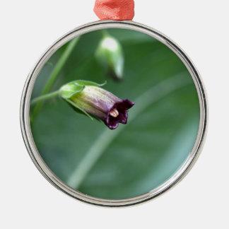 Belladonna or deadly nightshade (Atropa belladonna Silver-Colored Round Ornament