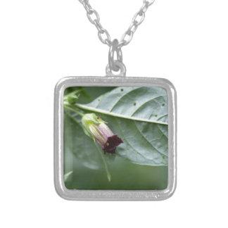 Belladonna or deadly nightshade (Atropa belladonna Silver Plated Necklace