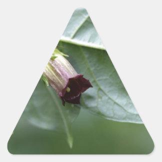 Belladonna or deadly nightshade (Atropa belladonna Triangle Sticker