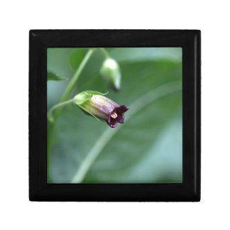 Belladonna or deadly nightshade (Atropa belladonna Trinket Box