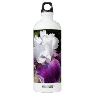 Belle conception pourpre et blanche d'iris