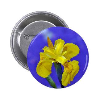 Belle fleur d iris jaune badge avec épingle