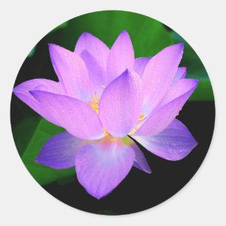Belle fleur de lotus pourpre dans l'eau sticker rond