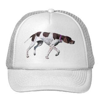 Belle photo de chien anglais d'indicateur, chapeau casquettes
