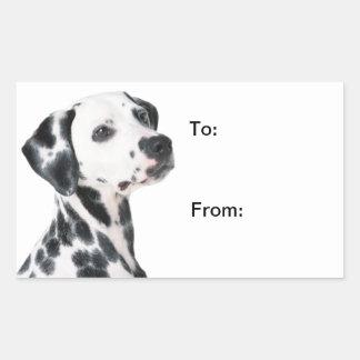 Belle photo de chien dalmatien à des autocollant