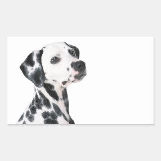 Belle photo de chien dalmatien, cadeau sticker rectangulaire