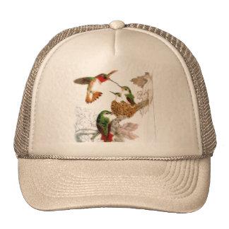 Belle photo de colibris casquettes de camionneur