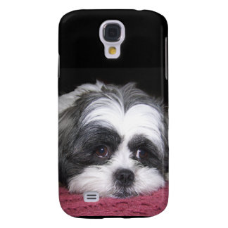 Belle The Shih Tzu Dog