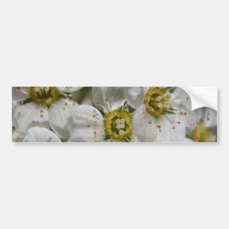 Belles fleurs blanches de Bolossom et centres jaun Autocollant De Voiture