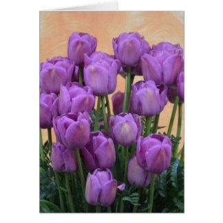 Belles tulipes pourpres de ressort