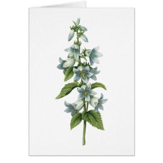 bellflower(Campanula sp.) by Redouté Card