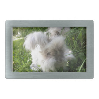 "Belt Buckle - English Angora ""Bradley"""