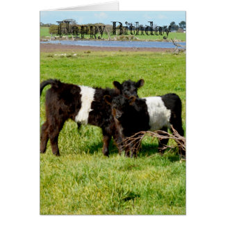 Belted Galloway Baby Calves, Birthday Card