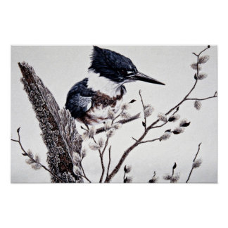 Belted kingfisher (female) poster