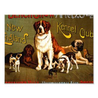 Bench Show. New England Kennel Club Photo Print
