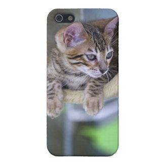 Bengal Cat Case For iPhone 5/5S