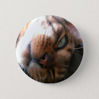 Bengal cat crazy 2 inch round button
