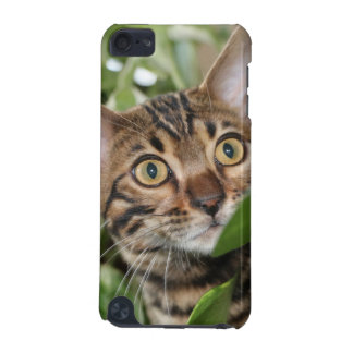 BENGAL KITTEN IN POTHOS iPod TOUCH 5G CASES