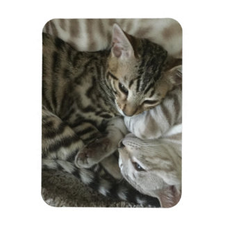 Bengal Kittens Magnet