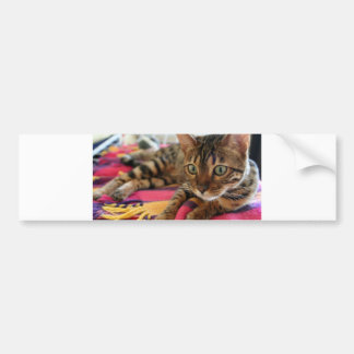 Bengal_laying.png Bumper Sticker