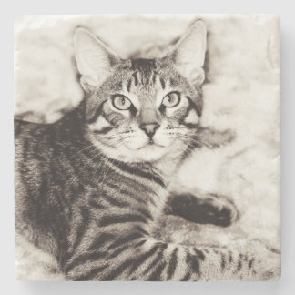 Bengal Photo Stone Coaster