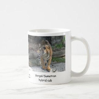 Bengal/Sumatran hybrid Tiger cub Mugs