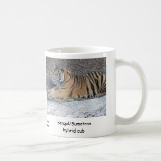 Bengal/Sumatran hybrid Tiger cub Coffee Mug