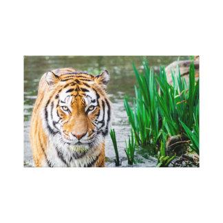 Bengal Tiger Canvas