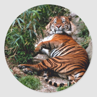 Bengal Tiger Classic Round Sticker