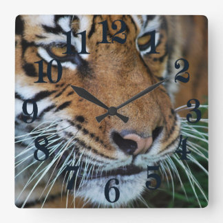 Bengal Tiger Close Up Africa Square Wall Clock