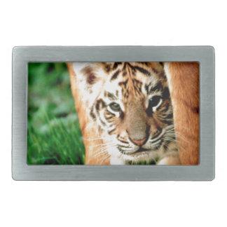 Bengal Tiger Cub Peers Out Belt Buckles