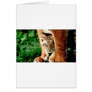 Bengal Tiger Cub Peers Out Card